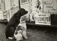 Fotópályázat az Állatok Világnapja alkalmából