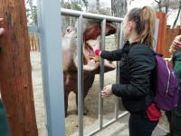 A 9.C osztály a pécsi állatkertben járt